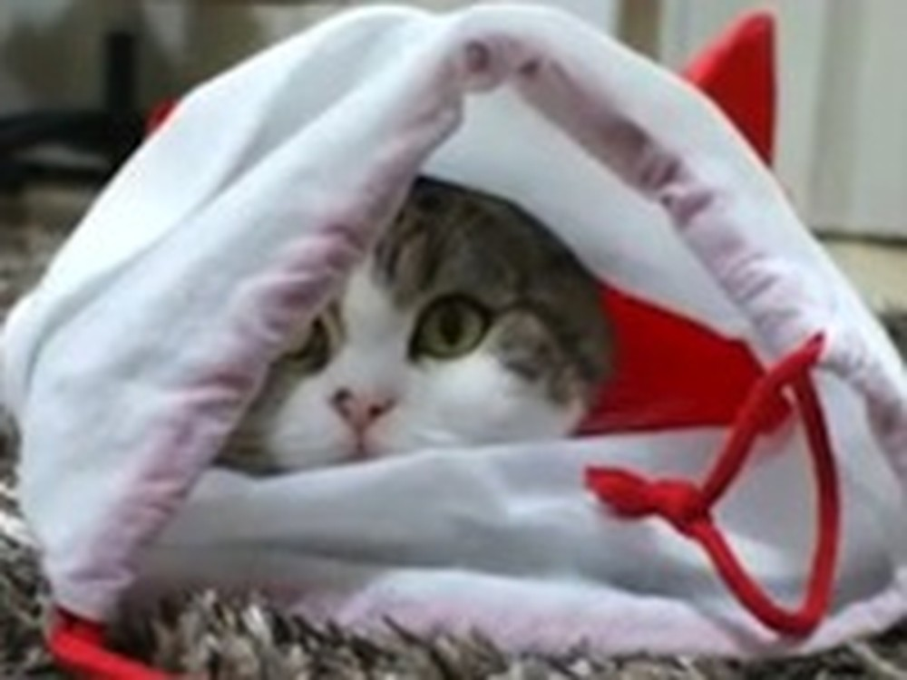 Adorable Shy Kitty Hides in a Christmas Stocking