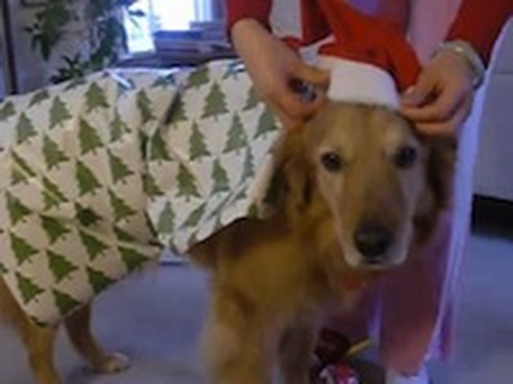 How to Wrap a Doggy as a Christmas Gift - This is Cute