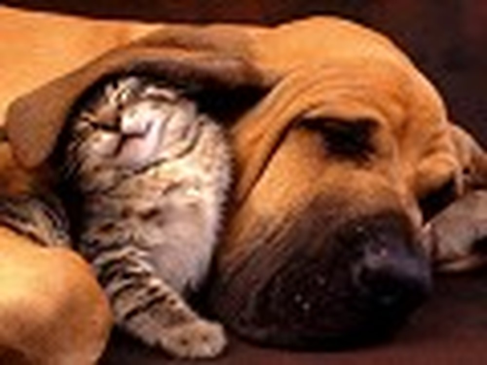 Adorable Picture of a Dog and a Kitty Together