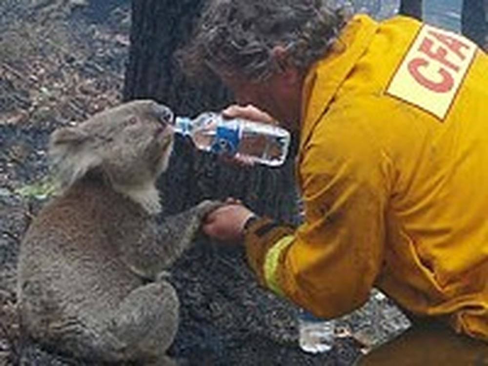 Firefighter Saves a Koala Bear from a Bushfire
