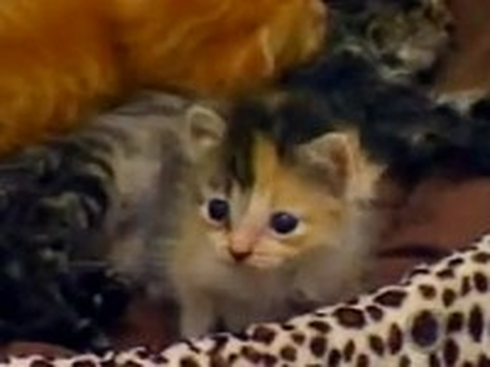 Six Abandoned Kittens Get an Unlikely Mommy