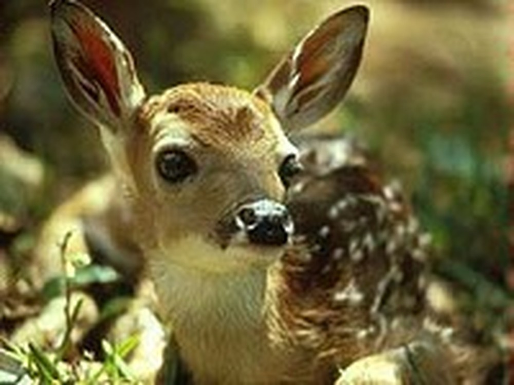 Workers Reunite a Trapped Fawn with its Mother