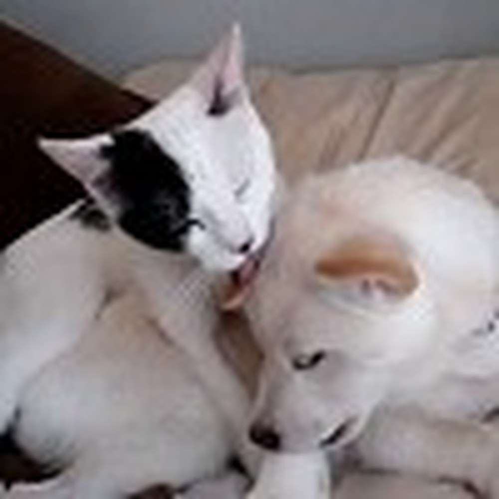 Kitty Cleans her Puppy Friend - This is So Cute