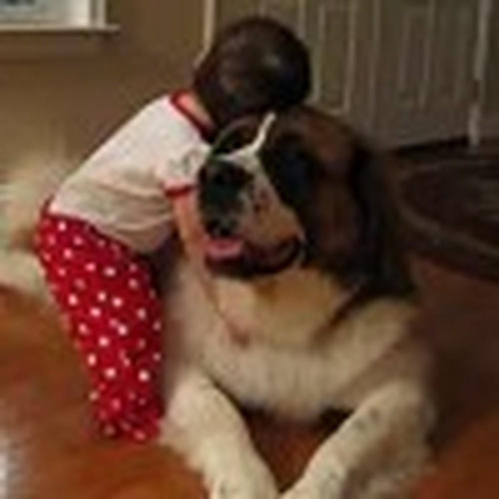 Cute Little Girl Hugs a Big Saint Bernard - So Sweet