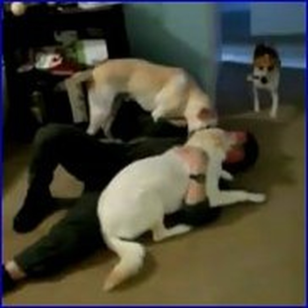 Sailor has a Sweet Reunion With his 3 Happy Dogs