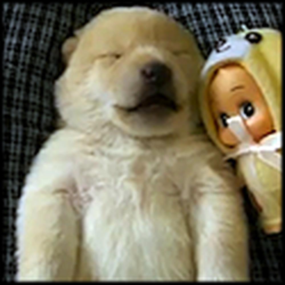 Ridiculously Cute Puppy Will Make You Say Awwwww