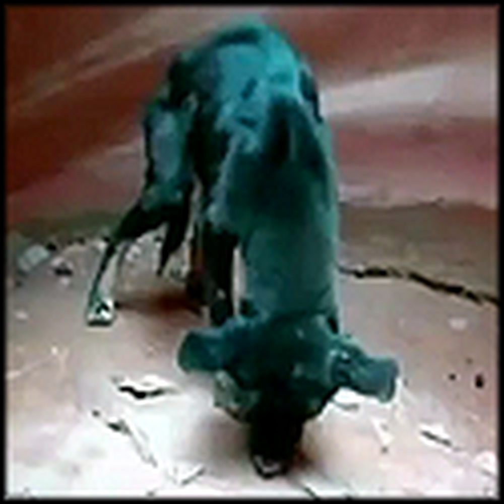 Man Rescues a Puppy From a 350 Feet Canyon