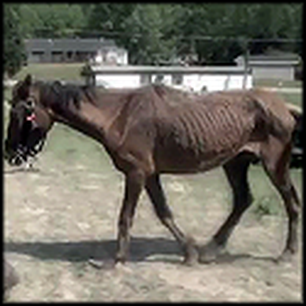 Mistreated Horses Get Rescued by Caring People
