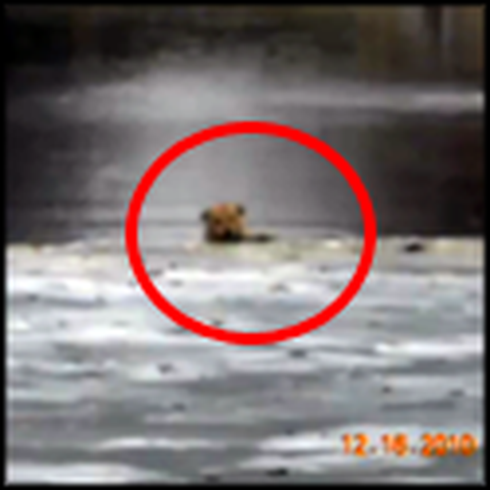 Poor Doggy Gets Rescued from Icy Lake by Caring People