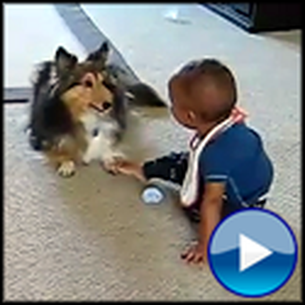 Overly Excited Dog and Adorable Baby Play Together