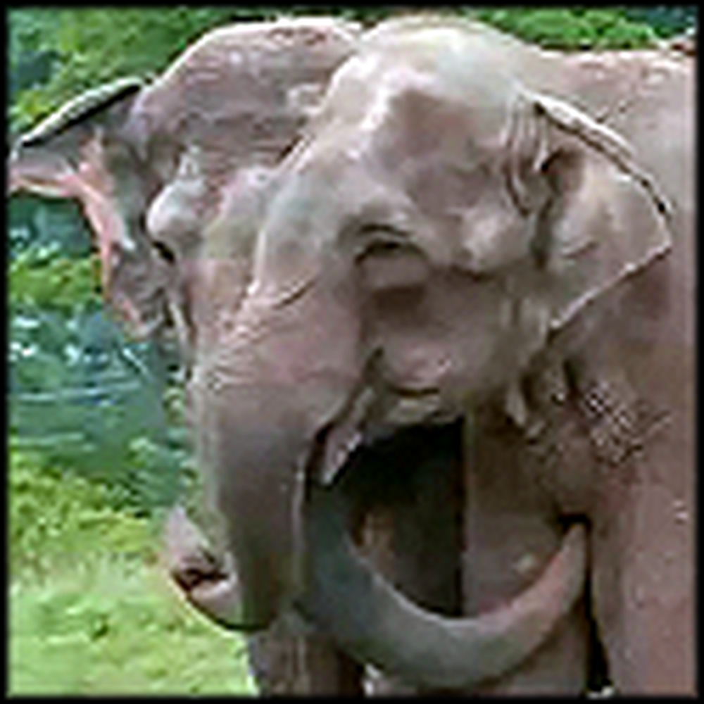 Elephants Reunite After 20 Years Apart