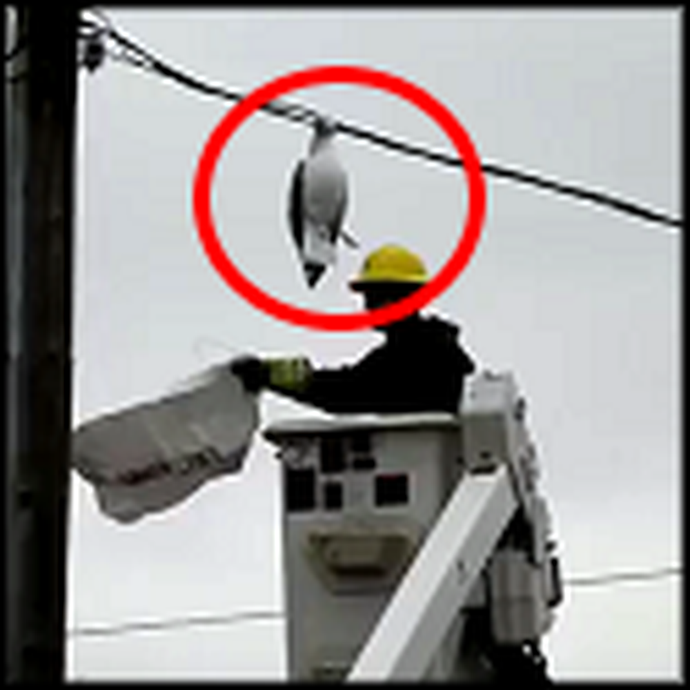 Caring Rescue of a Seagull Caught in Electrical Wires