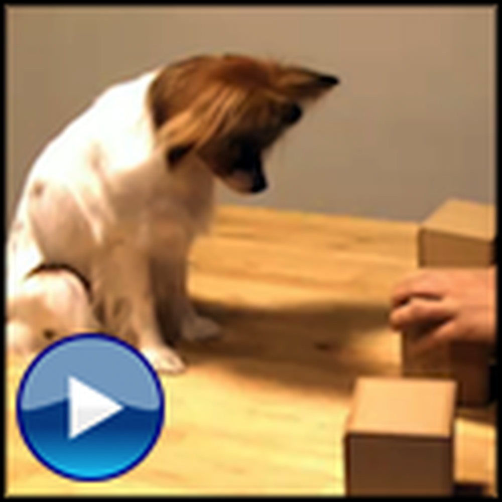 Fun and Smart Dog Plays the Shell Game - And Wins