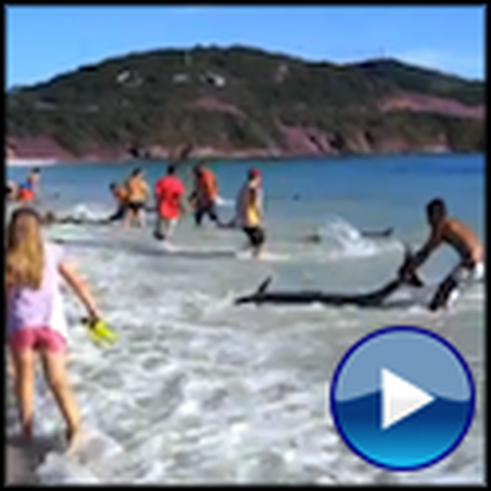 30 Stranded Dolphins Rescued - One of the Most Amazing Sights Ever