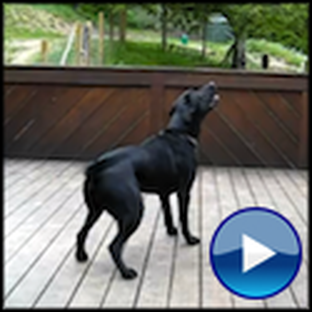 A Playful Dog's Dream Comes True - LOL a Must See