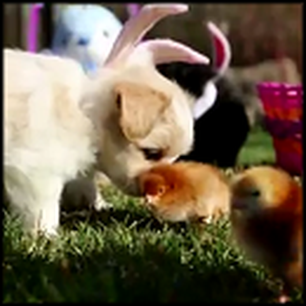 Puppy Easter - a Super Cute Video to Make You Smile