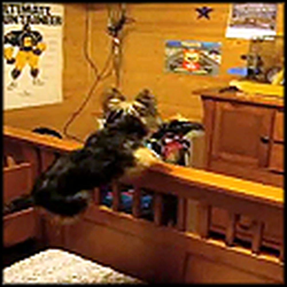 The Most Excited Dog Ever Does Something So Funny