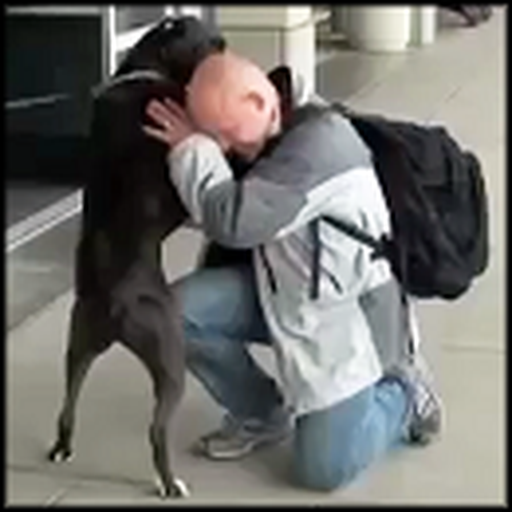 Soldier Home From Overseas Surprises his Happy Dog