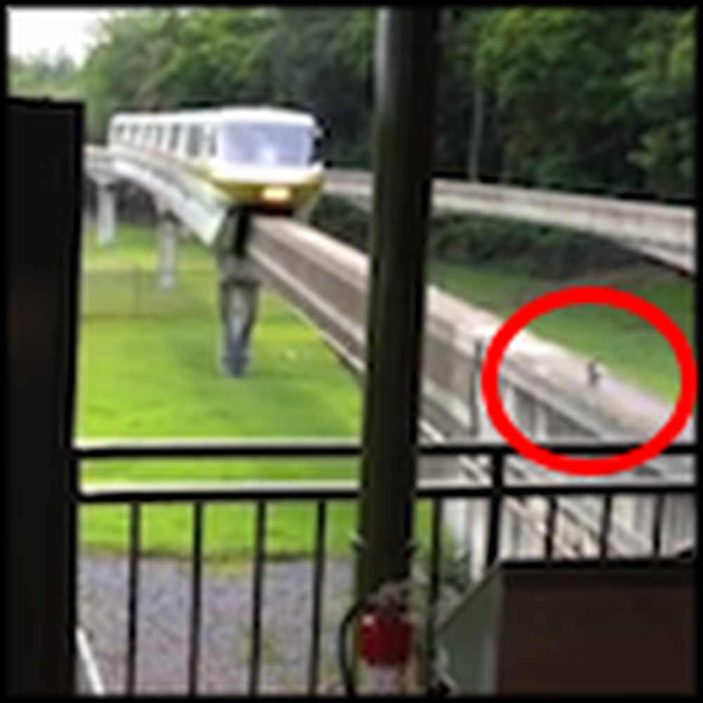 Squirrel Stops a Train in its Tracks - But Watch Til the End
