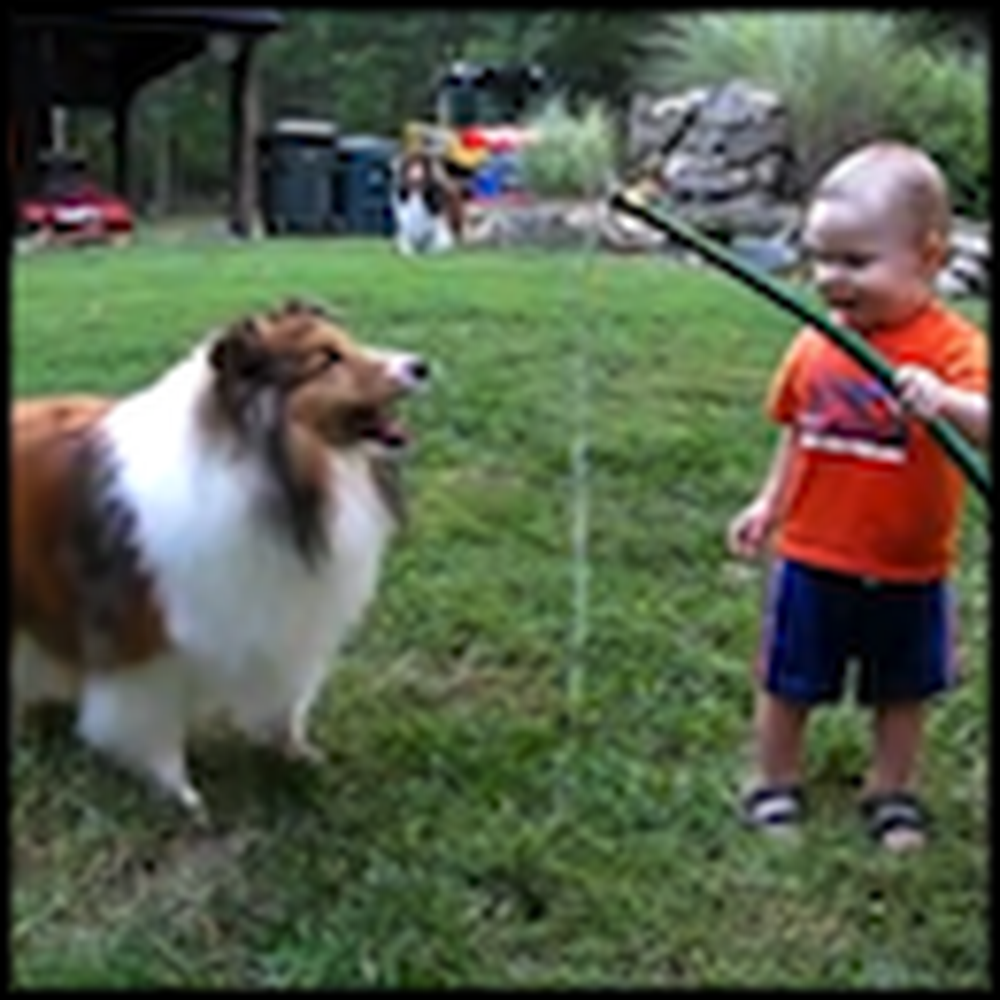 Baby and Dog Playing with a Hose Will Make Your Day