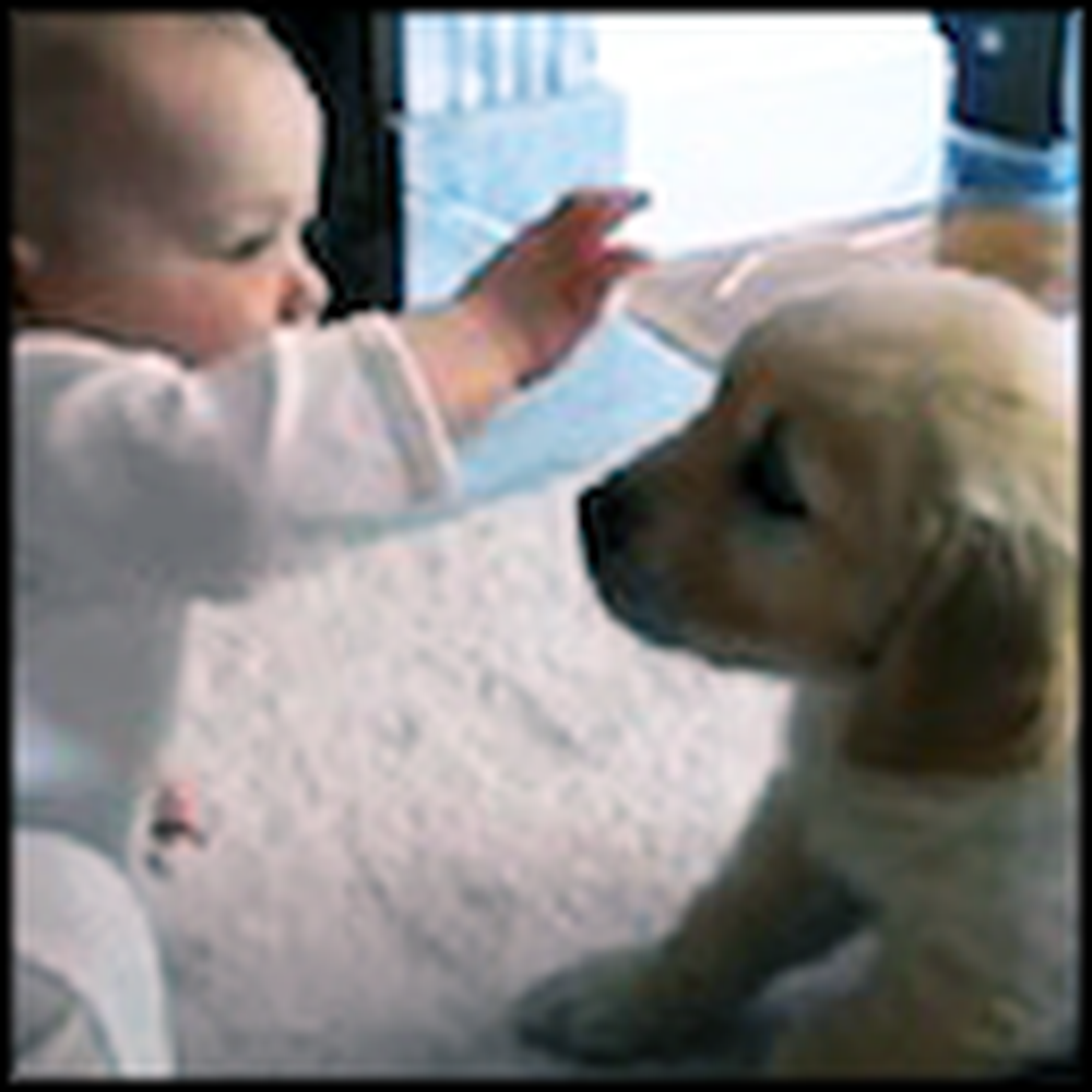 Baby and Golden Retriever Puppy Meet for the First Time