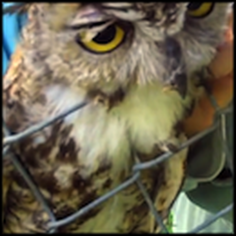 Kind Rescuers Save the Life of an Owl in Trouble