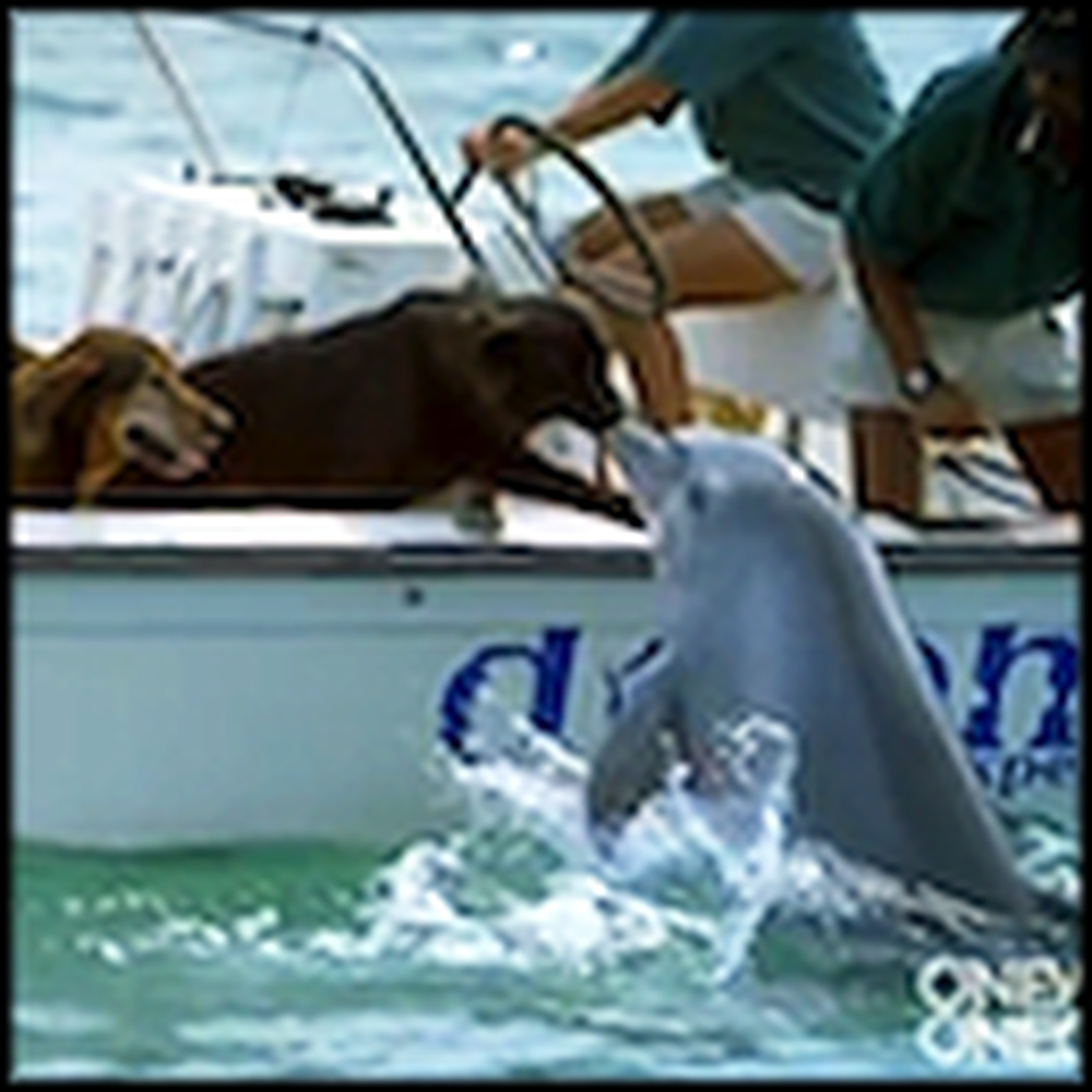 A Happy Dolphin Gives a Dog a Kiss then Jumps for Joy