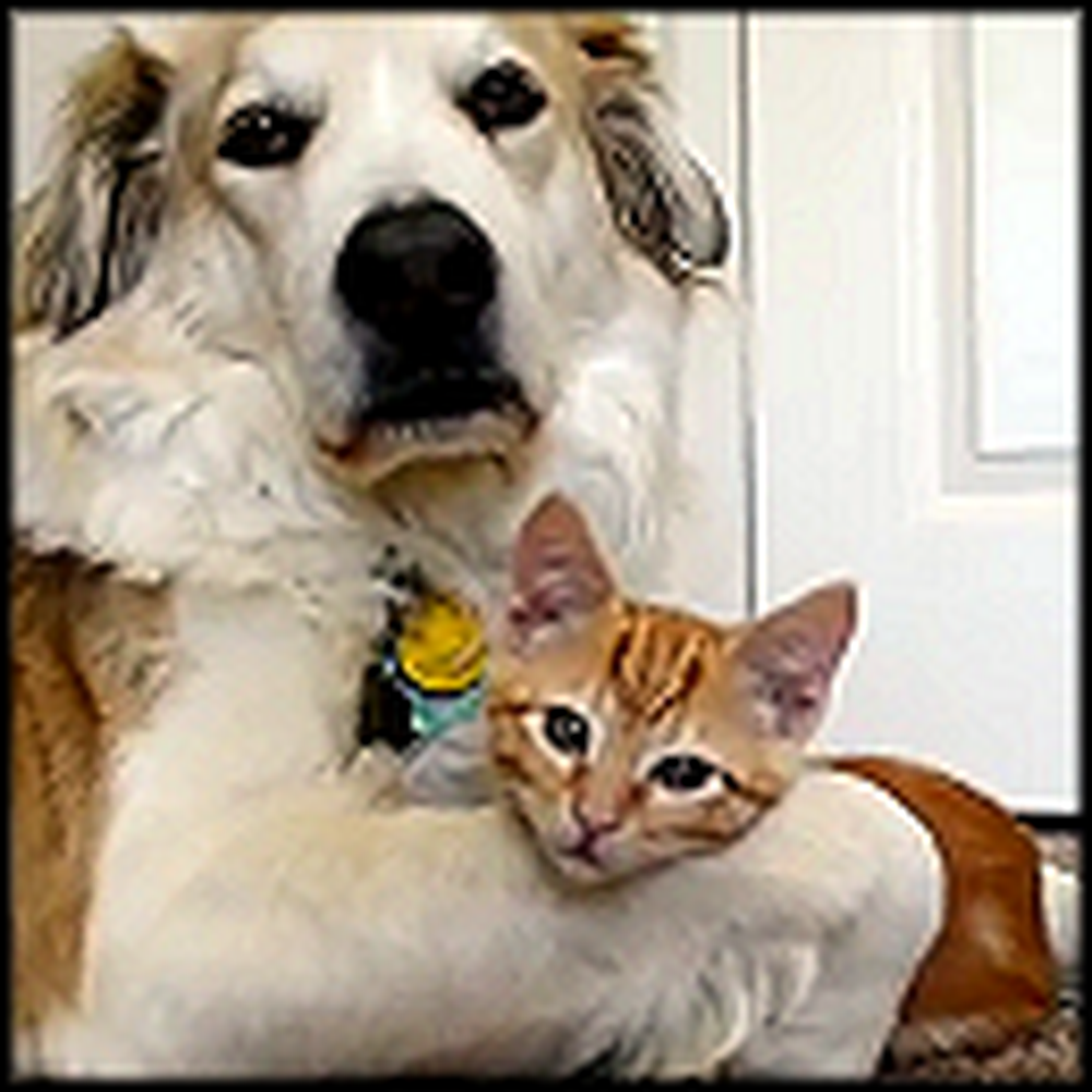 Dog Snuggles with his Little Kitty So Tightly - Very Cute