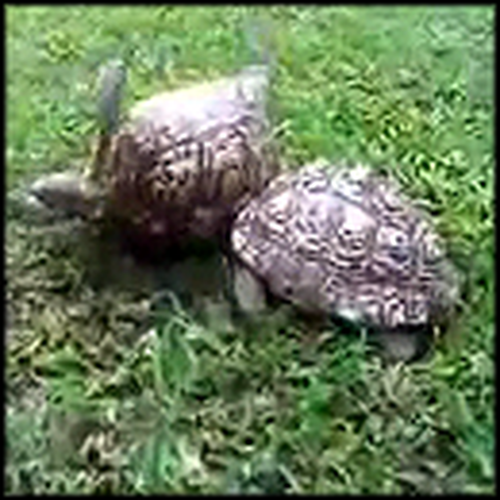 Turtle Shows What Being a Friend is All About