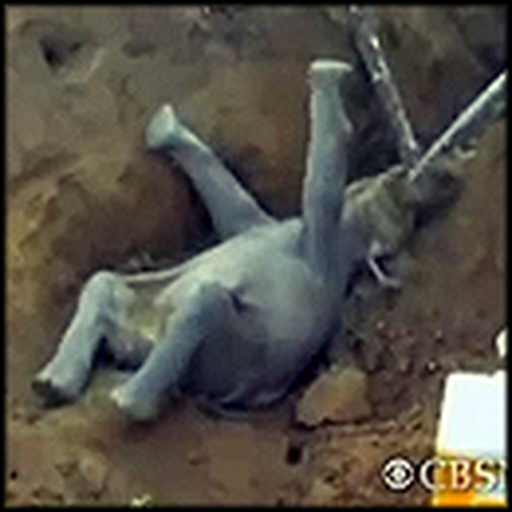 People in India Rescue a Trapped Baby Elephant