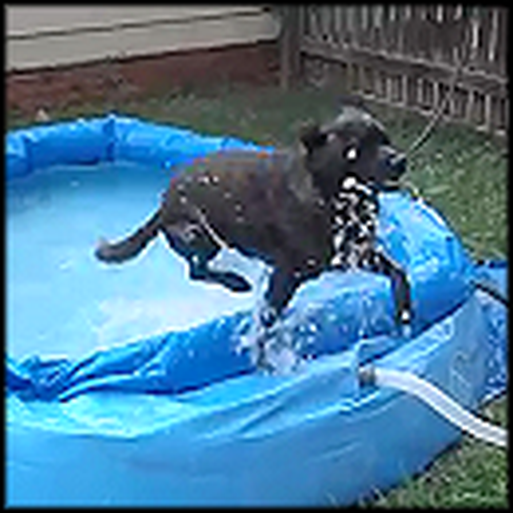 Super Excited Dog is Really Ready for Summer Swimming
