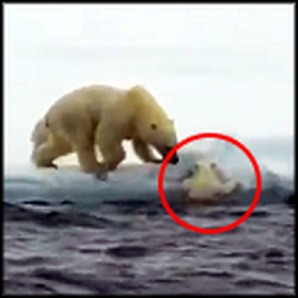 Polar Bear Mommy Comes to the Rescue of her Troubled Cub