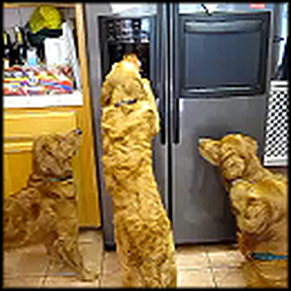 How To Get Ice From the Fridge by 4 Smart Dogs