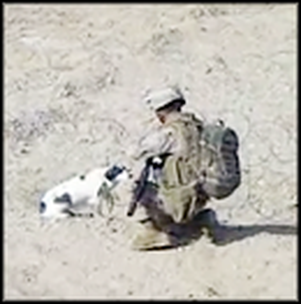US Sergeant Rescues a Poor Puppy Trapped in a Fence