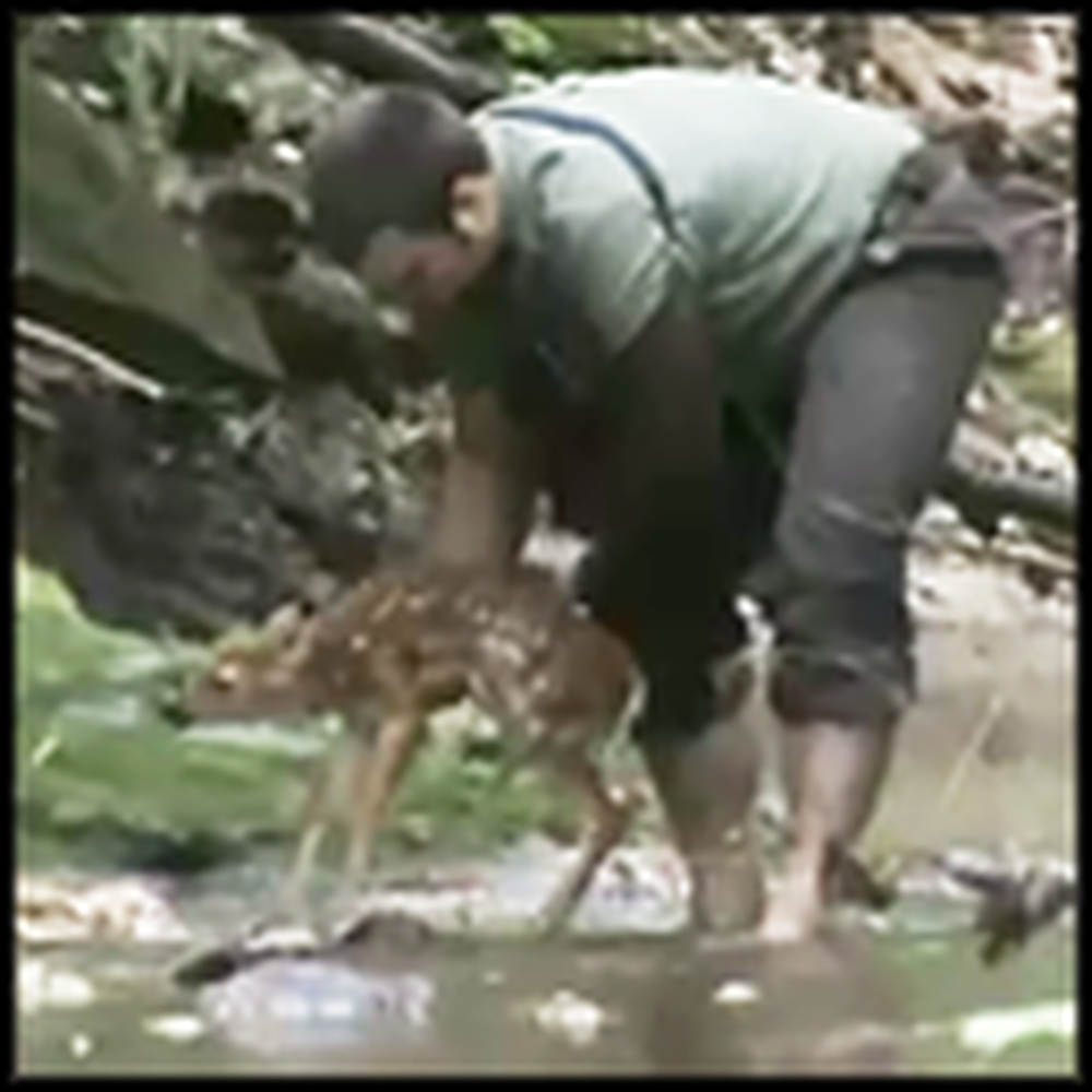 Paralyzed Man Saves a Fawn From Drowning - Very Heroic