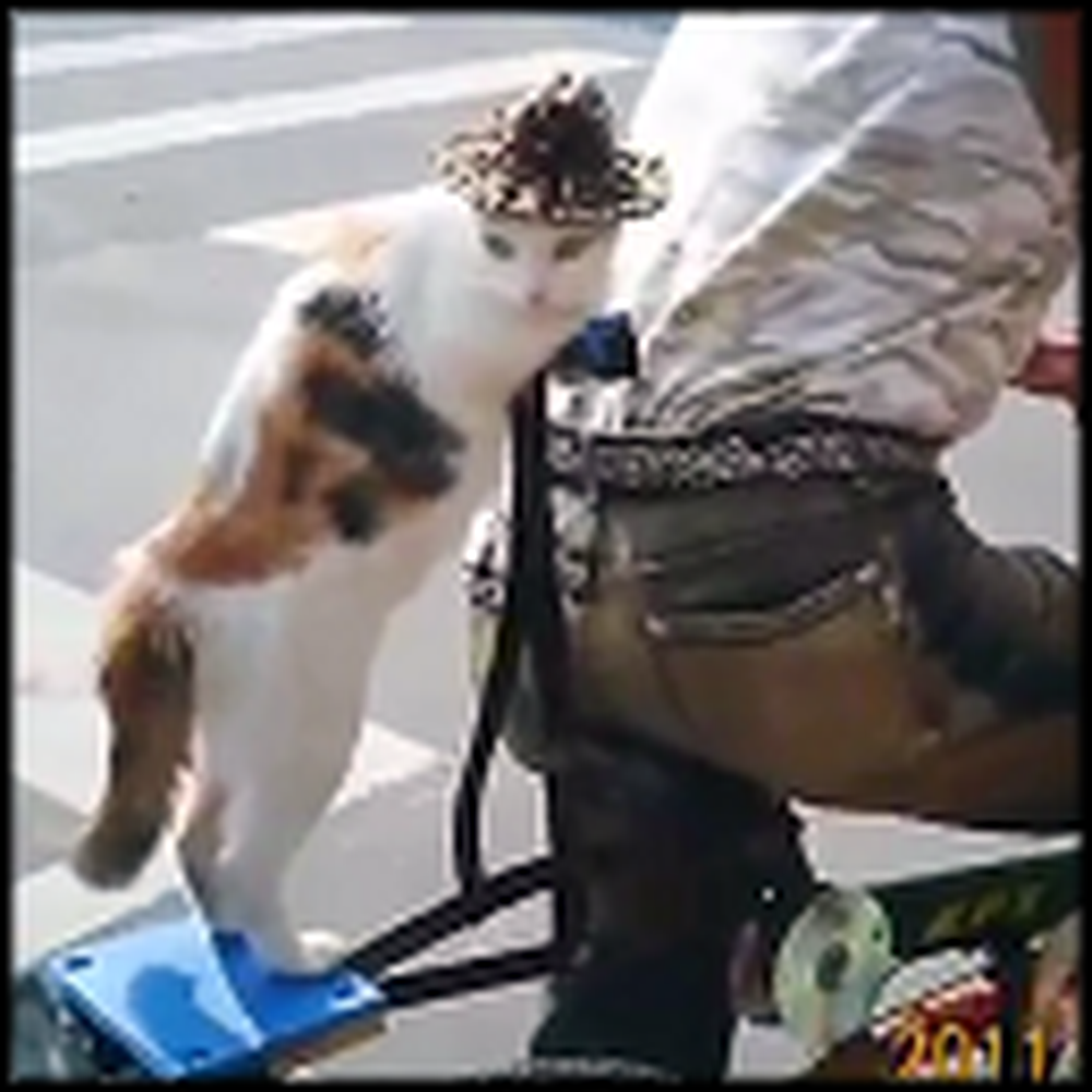 A Cat Wearing a Hat Goes for a Ride on a Bike - LOL
