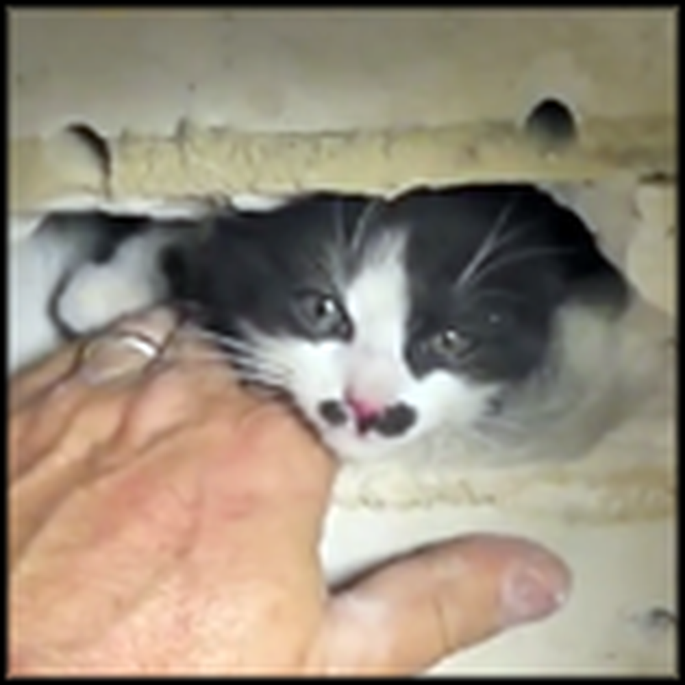 Man Busts Down a Wall to Rescue a Trapped Kitten