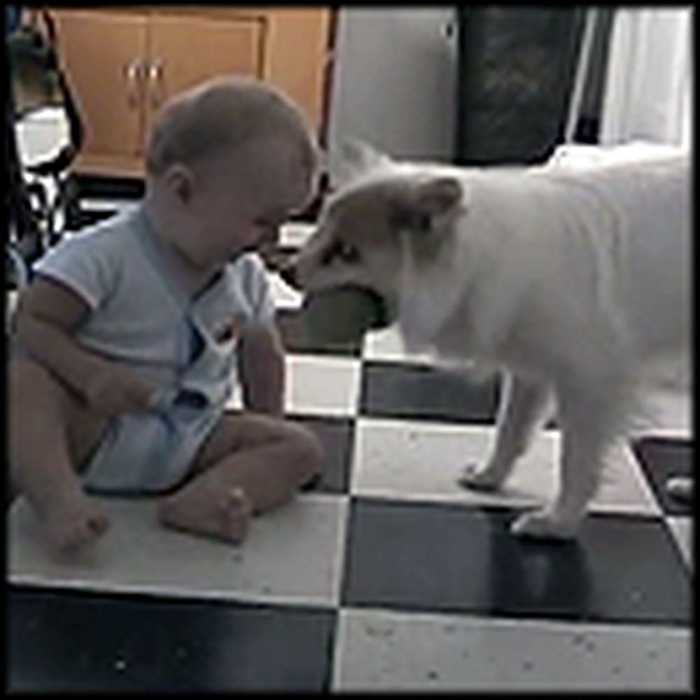 What This Dog Teaches a Baby Will Make Your Day - LOL