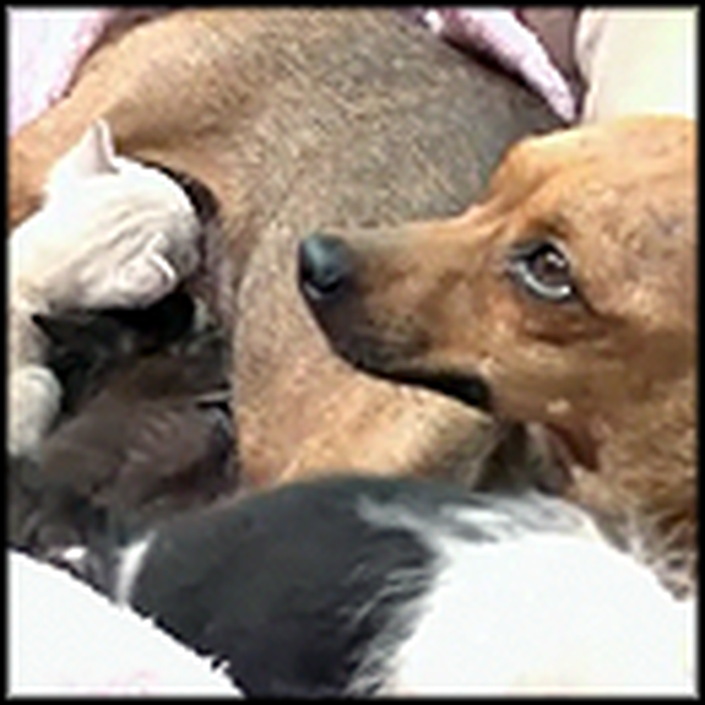 Rescued Dog Becomes a Hero to 2 Abandoned Kittens