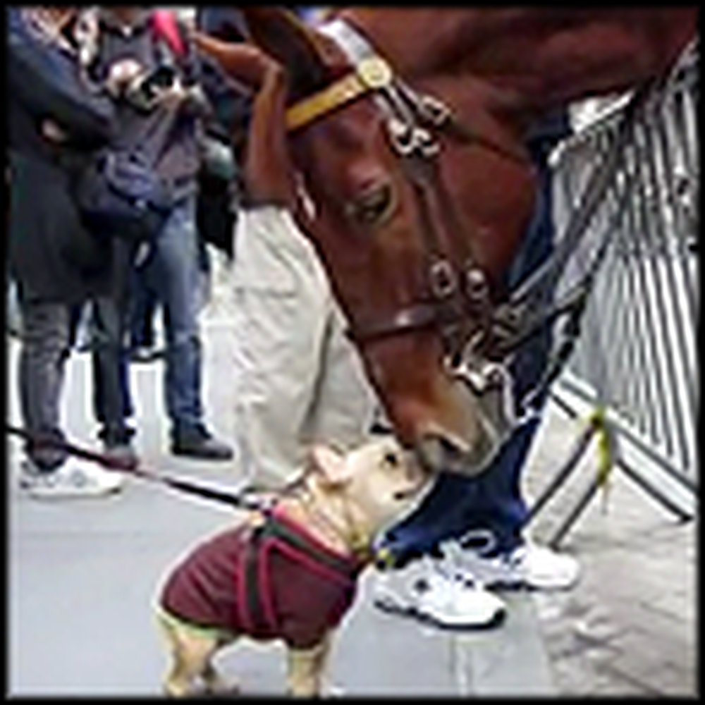 Watch What This Police Horse and Adorable Pup Do