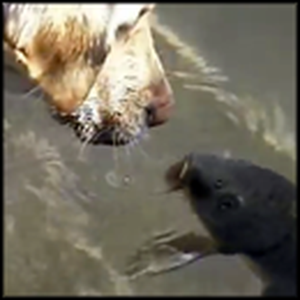 Dog Becomes Best Friends with a Fish - Hilarious