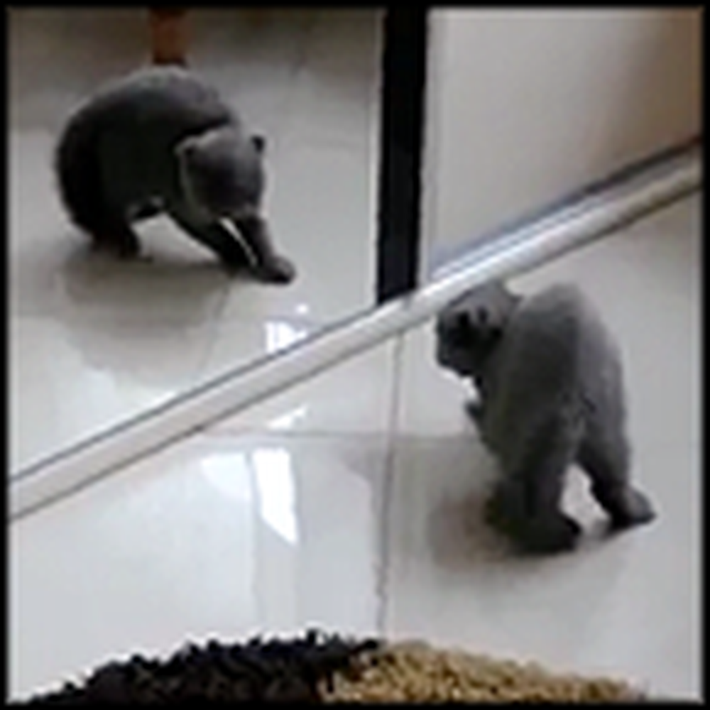 Cute Kitty Battles Himself in the Mirror - Aww