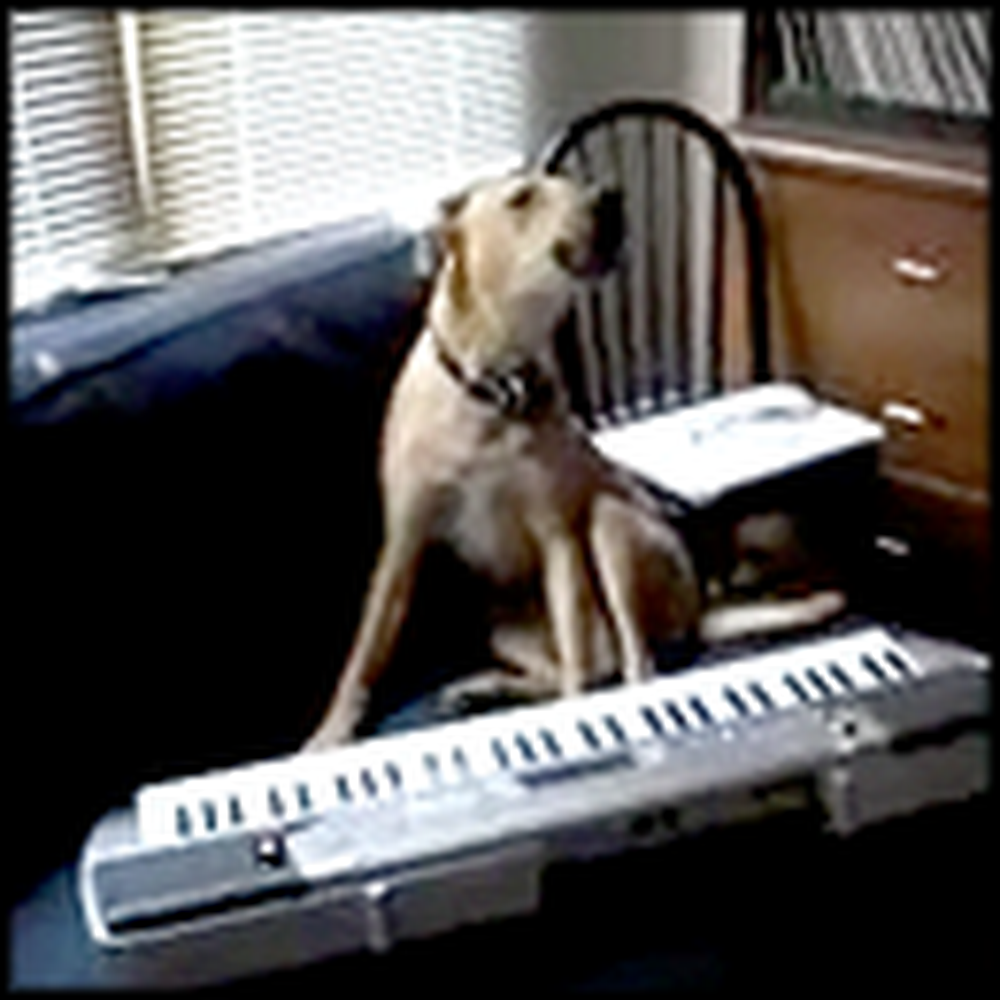 Meet the Dog that Sings and Plays Keyboard