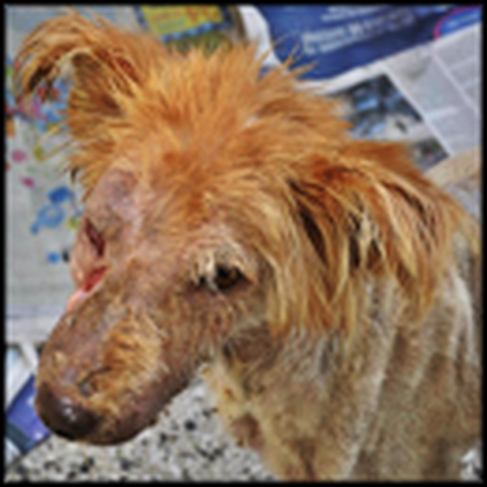 Dog on the Brink of Death Gets a Touching Rescue