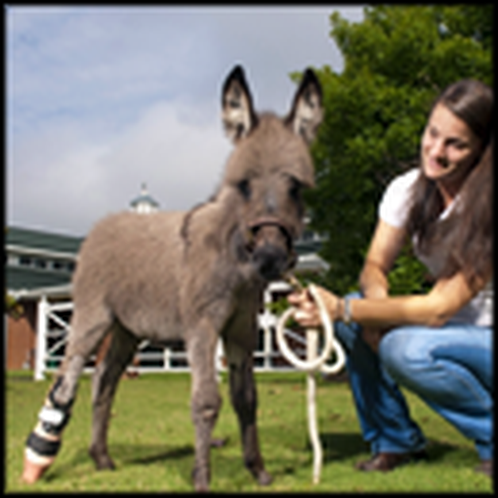 Tiny Donkey Foal Gets a Little Help From her Friends