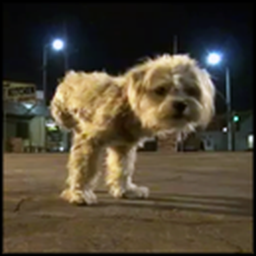Abused Three Legged Dog Gets Saved by a Guardian Angel