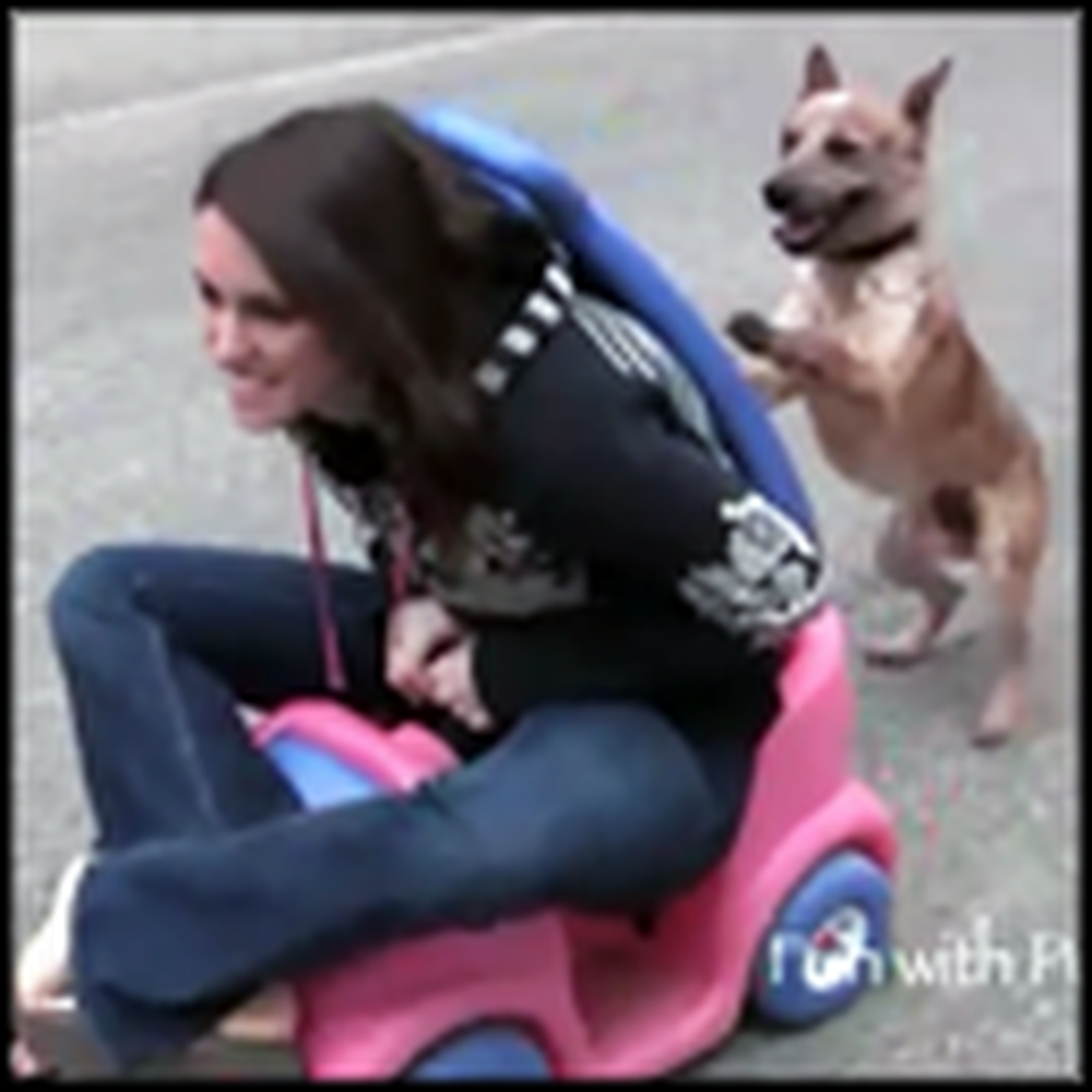 Funny Dog Pushes his Owner in a Stroller