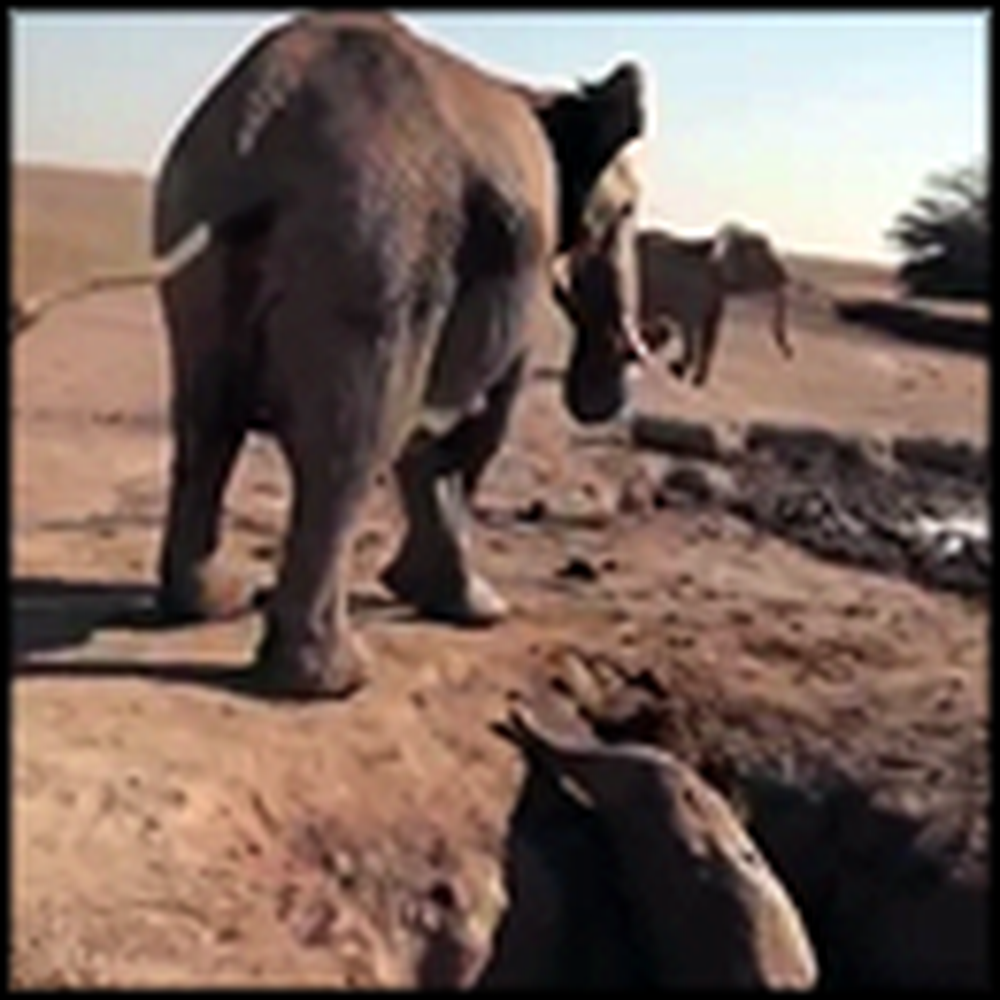 The Rescue of a Lifetime in an African Desert