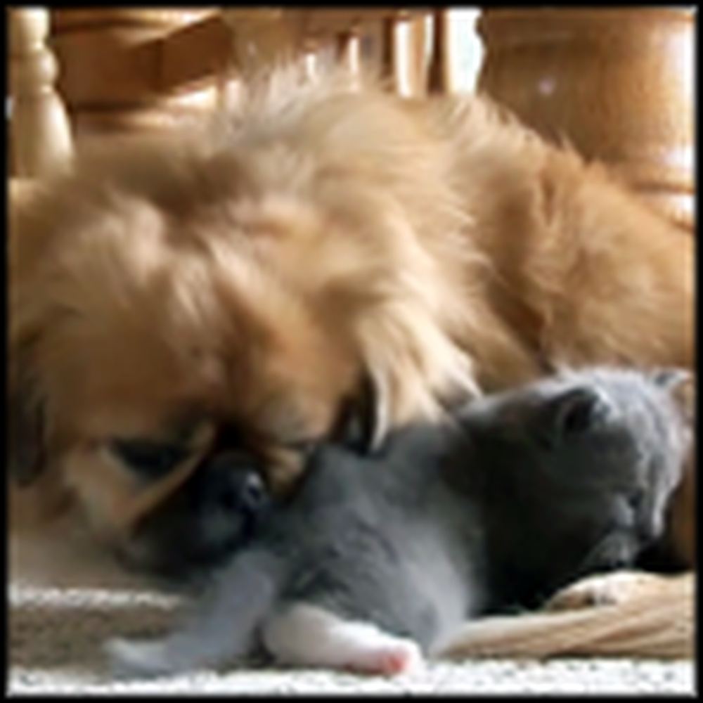 What One Dog Did for a Stray Kitten is Simply a Miracle