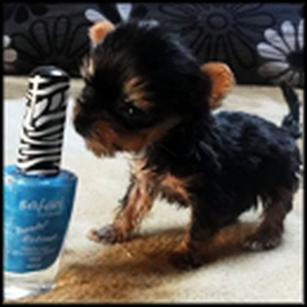 Smallest Dog in the World Will Win Your Heart